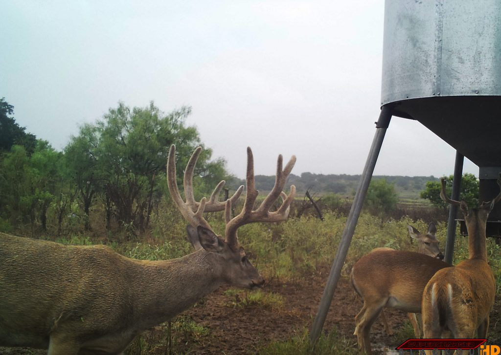 Guided Whitetail Deer Hunting in Texas